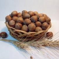 Саженцы лещины Бомба (Кахский 35)
