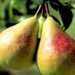 Яблунівська